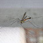 La zanzariera quale scegliere per proteggere al meglio la propria abitazione
